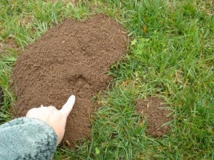Gopher Control needed from gopher mound